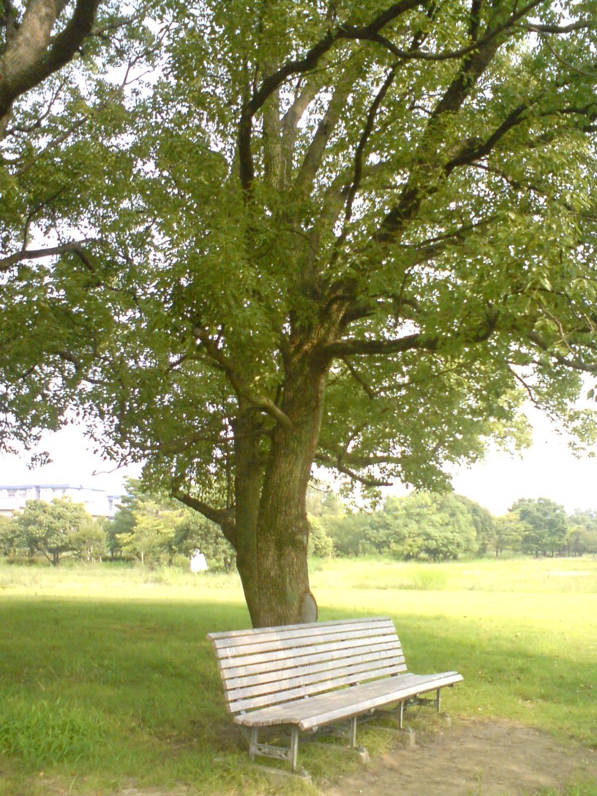 Ohnaka_bench1_2